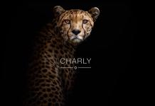 Die Praxissoftware CHARLY von solutio wird durch einen Imagefilm beworben.