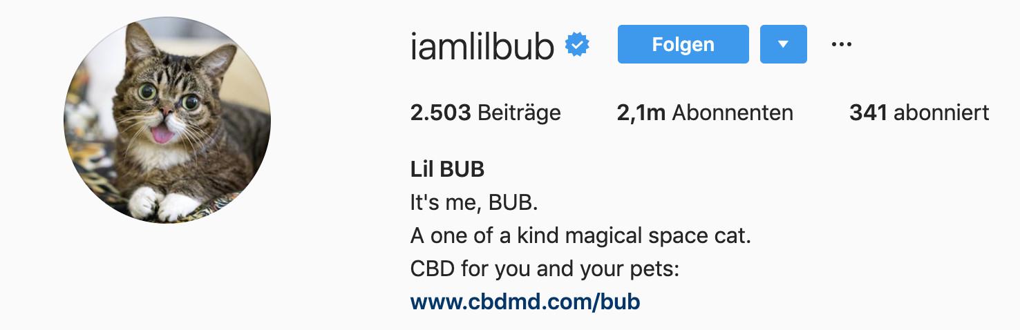 Ein Beispiel für Catfluencer auf Instagram: Lil BUB