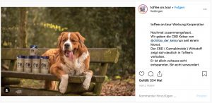 Deutsche Dog- und Catfluencer auf Instagram