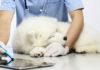 tierarzt_klinik-Hund