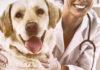 Hund_Tierarzt