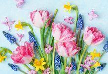Blumen_Frühlingsgruß_Ärzteverlag